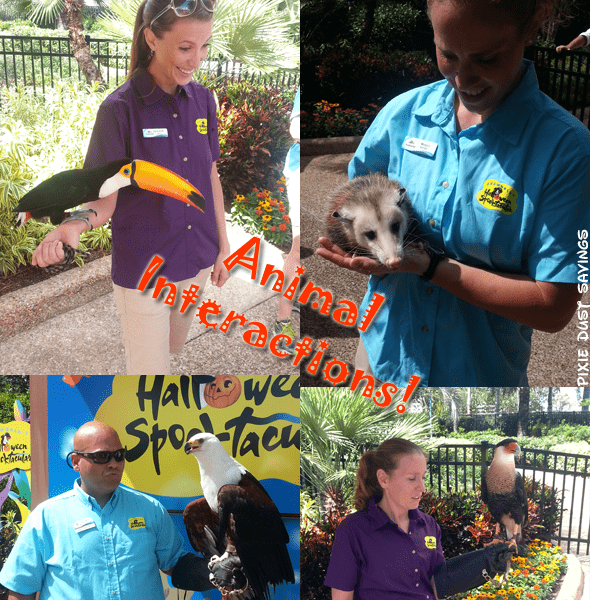 sea-world-animal-interactions-spooktacular