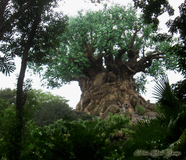 Animal Kingdom Bucket List