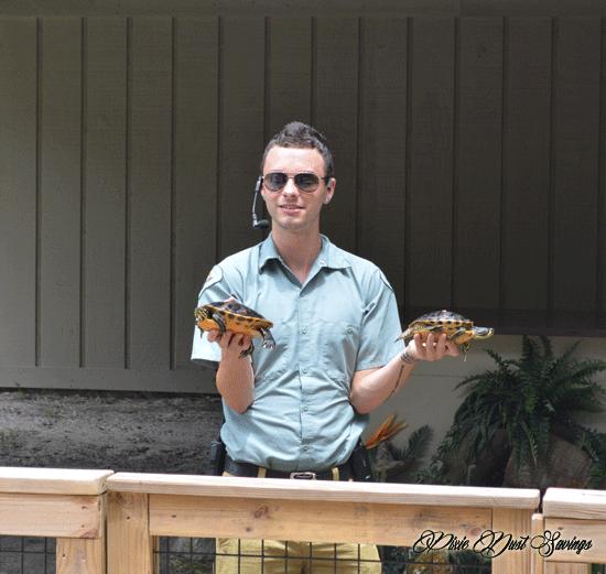 weekiwachee-turtles