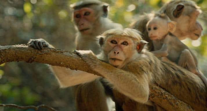 monkey kingdom2