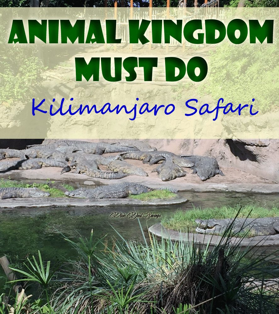 Kilimanjaro Safari- Animal Kingdom Must Do