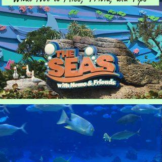 Disney's Aquarium | The Seas with Nemo and Friends