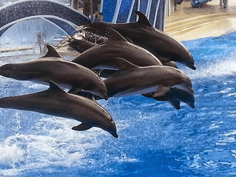 Seaworld Orlando tips